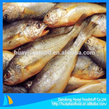 special business price for IQF frozen yellow croaker